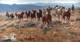 Cow Horse Country