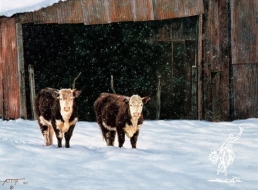 Hick's Hereford Heifers