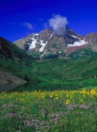 Wildflowers Of Maroon Bells